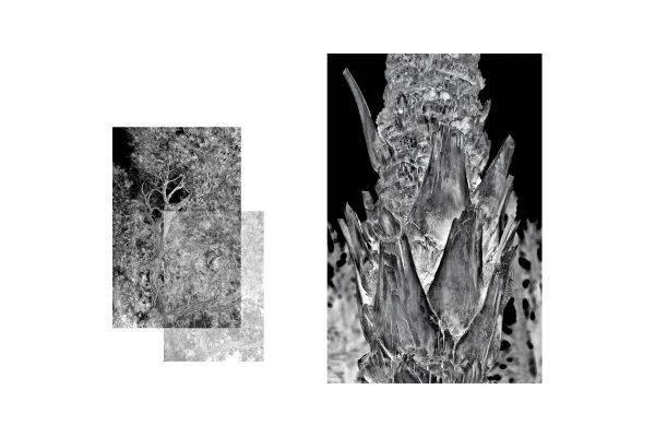 images-livre-nefta-int-1