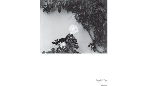 monaco-pluie-rose